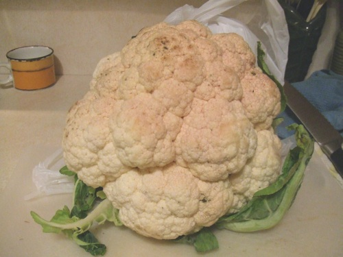 Huge cauliflower